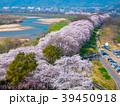 桜 花 ソメイヨシノの写真 39450918