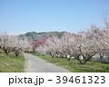 信州新町 梅 春の写真 39461323
