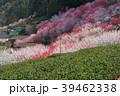 高知県仁淀川町上久喜の春風景 39462338