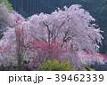高知県仁淀川町上久喜の春風景 39462339