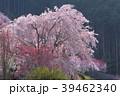 高知県仁淀川町上久喜の春風景 39462340