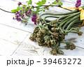 蕨 山菜 花の写真 39463272