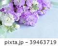 ストックの花束 39463719