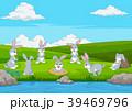 動物 うさぎ バニーのイラスト 39469796