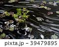 花筏 春 桜の写真 39479895