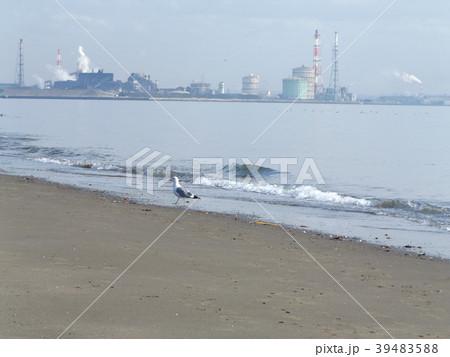 稲毛海岸の砂浜 39483588