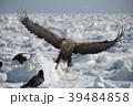 流氷とオジロワシ(北海道羅臼町) 39484858