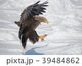 流氷とオジロワシ(北海道羅臼町) 39484862