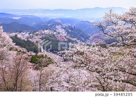 吉野山 39485205