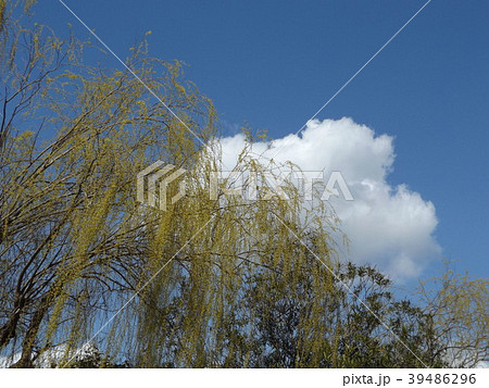 草野水路脇の道路からの青空とと白い雲 39486296