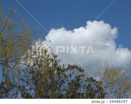 草野水路脇の道路からの青空とと白い雲 39486297