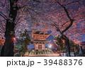 池上本門寺の夜桜 五重塔 39488376