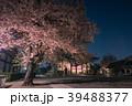 池上本門寺の夜桜 大堂(祖師堂) 39488377