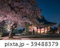 池上本門寺の夜桜 大堂(祖師堂) 39488379