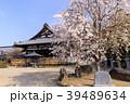 安倍文殊院 寺院 春の写真 39489634