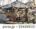 安倍文殊院 寺院 春の写真 39489635