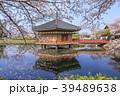 安倍文殊院 寺院 春の写真 39489638