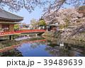 安倍文殊院 寺院 春の写真 39489639