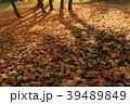 落ち葉 落葉 地面の写真 39489849