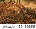 落ち葉 落葉 地面の写真 39489856