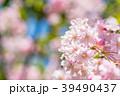 桜 春 花の写真 39490437