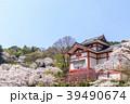 長谷寺 寺 桜の写真 39490674