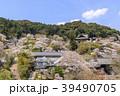 長谷寺 寺 桜の写真 39490705