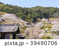 長谷寺 寺 桜の写真 39490706
