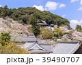 長谷寺 寺 桜の写真 39490707