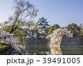 桜 天守閣 春の写真 39491005