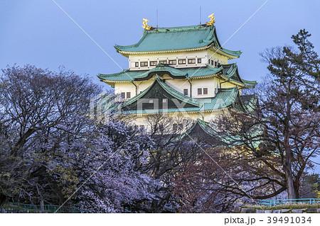 愛知県 名古屋城桜 夜景 39491034
