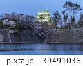 愛知県 名古屋城桜 夜景 39491036