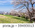 桜 春 住宅街の写真 39493013