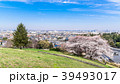 桜 春 住宅街の写真 39493017