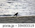 海 カラス 砂浜の写真 39493319