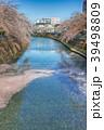 春 桜 ソメイヨシノの写真 39498809
