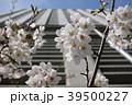 東京都 桜 サクラの写真 39500227