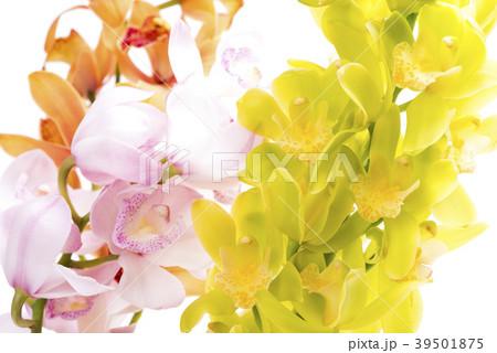 白背景の3種のデンドロビウムの花 39501875