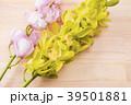 デンドロビウム デンドロビューム 花の写真 39501881