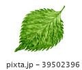 大葉 シソの葉 水彩イラスト 39502396