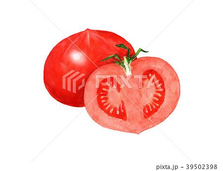 トマト 水彩イラスト 39502398