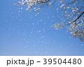 桜 桜吹雪 青空の写真 39504480