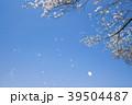 桜 桜吹雪 青空の写真 39504487