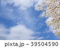 桜 桜吹雪 青空の写真 39504590