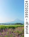 富士山 夏 ラベンダーの写真 39505224