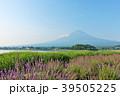 富士山 夏 ラベンダーの写真 39505225