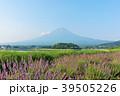 富士山 夏 ラベンダーの写真 39505226