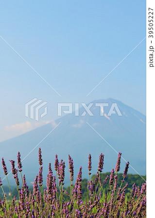 富士山とラベンダー 39505227