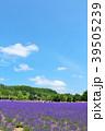 青空 夏 ラベンダー畑の写真 39505239