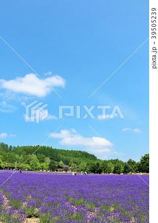 北海道 夏の青空とラベンダー畑 39505239